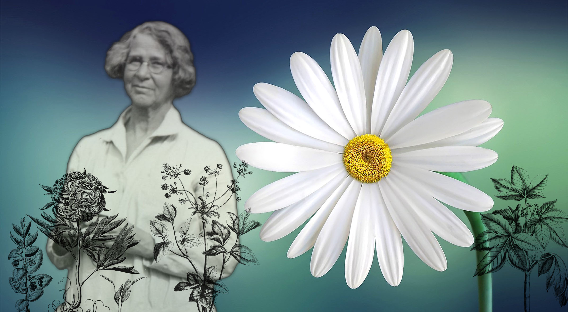 composite of image of Ynes Mexia and daisy flower